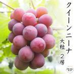 クイーンニーナ 2房 化粧箱 山梨県産 お中元 ギフトにおすすめ 赤ぶどう新品種