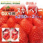 【要冷蔵】スカイベリー  2パック 大粒サイズ  約300g×2パック  栃木県産 苺 いちご イチゴ すかいべりー