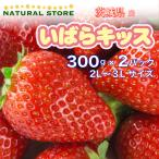 【要冷蔵】いばらキッス 2パック 2L 3Lサイズ 約300g×2パック 茨城県産 苺 いちご イチゴ イバラキッス ブランドいちご
