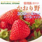 【要冷蔵】かおり野 2パック化粧箱 2L 3Lサイズ 約300g×2パック 静岡県産ほか 苺 いちご かおりの 高糖度 ブランドいちご 美味しい