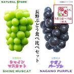 長野県産 ぶどう・マスカット 食べ比べセット 化粧箱 シャインマスカット ナガノパープル ぶどう