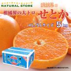 せとか  4L 5L 特大サイズ限定 5キロ正箱 愛媛県産 お取り寄せフルーツ せとか