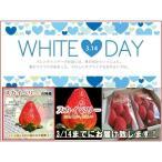 ホワイトデー特別企画 送料込 スカイベリー  2パック 大粒サイズ  約300g×2パック  栃木県産 苺 いちご イチゴ すかいべりー