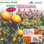 あんみつ姫 きんかん化粧箱 3キロ 佐賀県産 3L4Lサイズ お取り寄せフルーツ 金柑