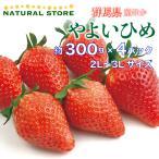 【要冷蔵】やよいひめ 約300g×4パック 2L 3Lサイズ 群馬県産ほか 苺 いちご ブランドいちご 美味しいいちご