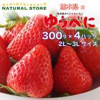 【要冷蔵】ゆうべに 4パック 2L 3Lサイズ 約300g×4パック 熊本県産 苺 いちご 高糖度 ブランドいちご