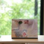 猫間商事仙台支店カレンダー2020 【メール便OK】