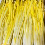 高級黄にら 上品 約50g 5束 岡山県産