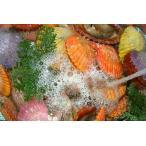 ヒオウギ貝 活き活きパック 100枚