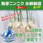 スプラウトにんにく 水耕栽培キット 2個セット 発芽ニンニク 栽培セット