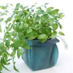 ガーデニング用プランターカバー 園芸用品  uchi-green 深海