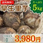 宮崎県綾町産 有機野菜 早生里芋たっぷり5kg 送料無料 里いも さといも