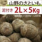 富山県産里芋 山野のさといも 泥つき 2...