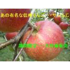 信州りんご・サンふじ 特秀約5kg 完売しました