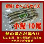 小 鮎(Mサイズ 10尾)