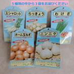 ニンニク(高級品種ホワイト六片)・らっきょう・エシャロット・わけぎ・ホーム玉ねぎの秋植え球根 セレクト3袋  国産 トーホク