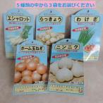 ニンニク(高級品種ホワイト六片)・らっきょう・エシャロット・わけぎ・ホーム玉ねぎの秋植え球根 セレクト3袋とにんにくの肥料600gのセット 野菜