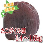 北海道根室産 タコ頭 1.4〜1.6kg (たこ タコ 北海道産 )