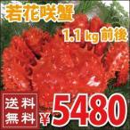 若花咲蟹(オス) 1.1kg前後 (かに カニ 蟹)