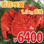 若花咲蟹(オス) 1.6kg前後 (かに カニ 蟹)