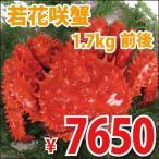 花蟹 - 若花咲蟹(オス) 1.7kg前後 (かに カニ 蟹)