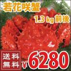 花蟹 - 若花咲蟹 1.3kg前後 (かに カニ 蟹 送料無料)