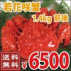 花蟹 - 若花咲蟹(オス) 1.4kg前後 (かに カニ 蟹)