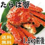 お中元 ギフト プレゼント たらば蟹 1.6kg前後 (かに 蟹 カニ 送料無料)