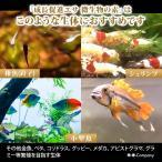 OーOー(オーオー)成長促進系エサ 微生物の素 プロテイン入り メダカ 稚魚(針子) 熱帯魚の餌