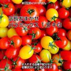 ミニトマト トマト 当店一番人気!数種類のミニトマトが入った店長おまかせバラミックス1.5キロ 一部地域を除き送料無料