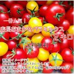 ミニトマト トマト 当店一番人気!数種類のトマトが入った店長おまかせバラミックス2キロ 一部地域を除き送料無料