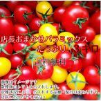 トマト ミニトマト 当店一番人気!数種類のミニトマトが入った店長おまかせバラミックス3キロ 送料無料(一部地域を除く)