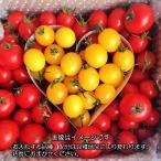 トマト ミニトマト 父の日 店長おまかせバラミックス『ハート』でお届け 2キロ 送料無料(一部地域を除く) 1日3箱限定