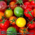 ミニトマト トマト 父の日 5色のトマトが入ったジュエリーボックス(バラ)1.5キロ 送料無料(一部地域を除く)