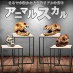 アニマルスカル 超リアル 骨 骸骨 化石 展示 インテリア 動物 パンダ オオカミ 犬 オランウータン レプリカ MR-ANISUKA 予約