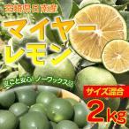 国産マイヤーレモン 2kg(宮崎県日南市)ノーワックス 防腐剤不使用 無選果 枝付き発送可