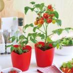 野菜 栽培セット ハートマト ハート型のミニトマト栽培セット 野菜 栽培キット 家庭菜園 キット ミニトマト プレゼント 培養土