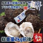 鳥取県産 ブランド天然岩がき 夏輝 約2kg詰め (岩ガキ/岩牡蠣/カキ) 6月初旬から中旬頃より順次発送