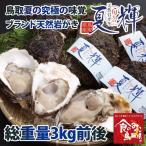 ブランド天然岩がき 夏輝 約3kg詰め (岩ガキ 岩牡蠣/カキ)