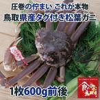 タグ付き 特上松葉ガニ(ズワイガニ) 【活】中サイズ1枚(600g前後)(かに/カニ/蟹)