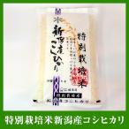 送料無料 平成29年産【新米】 農薬・化学肥料使用5割以下 特別栽培米10kg