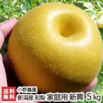 訳あり 新潟県産 日本梨 家庭用 新興5kg(8〜10個位) 小野農園/送料無料
