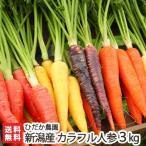 新潟産 カラフル人参 3kg(※1本あたり100〜150g※5色〜6色入り)ひだか農園/送料無料