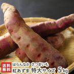 無農薬栽培の甘くて美味しい熟成さつまいも!紅あずま つなん小雪ちゃん 特大サイズ 5kg はらんなか 送料無料