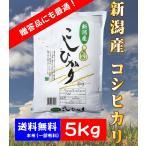 新潟県産 コシヒカリ 平成29年産 精米 5kg ご贈答用にも 熨斗対応いたします 送料無料(一部有料)