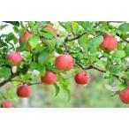 新春目玉!!破格の1000円!!!ビタミン満タン 無敵の柑橘こだわりセット!!数に限りがございます。