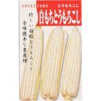 日本タネセンター トウモロコシ 白もちとうもろこし 40ml