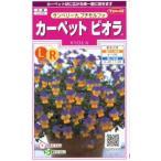 変化のある黄色と紫色の2色咲きのビオラ