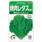 サカタのタネ 焼肉レタス チマサンチュ(緑) 2.5ml