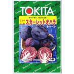 ショッピング春 トキタ種苗 キャベツ スカーレットオハラ  2ml